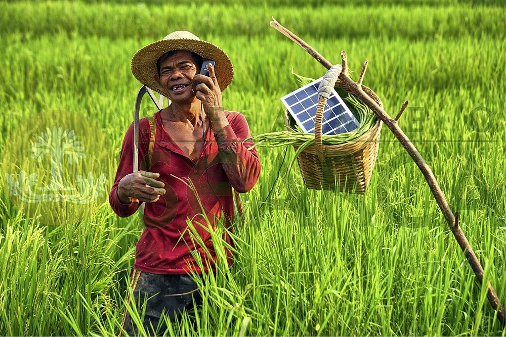the filipino farmers